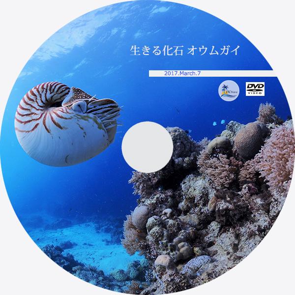 JK-Wave_ジェイケーウェーブ_竹島ファンタジー01