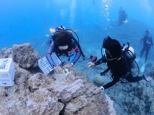 沖縄サンゴ植え付け_ジェイケーウェーブJK-Wave29