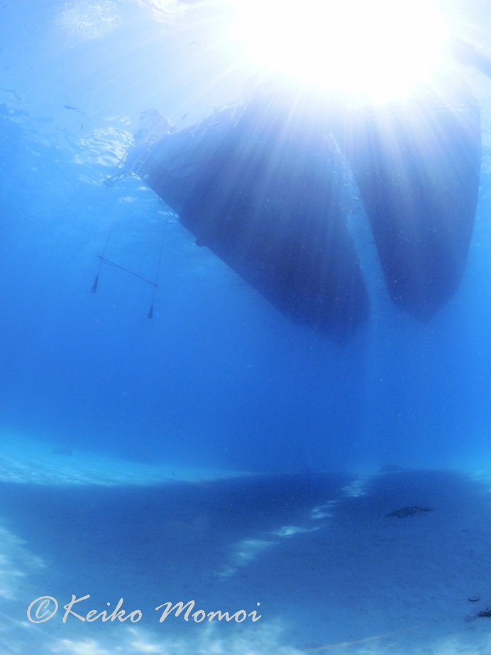 ジェイケイウェーブJKWave_沖縄スキューバダイビング_慶良間水中撮影004
